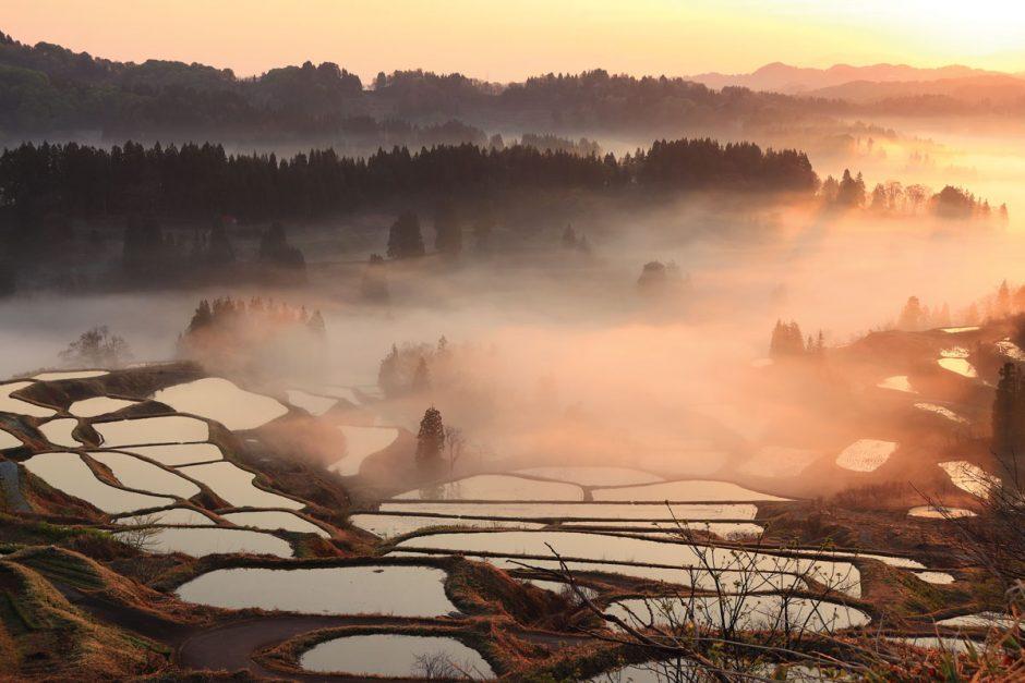 Niigata: Rich in Variety