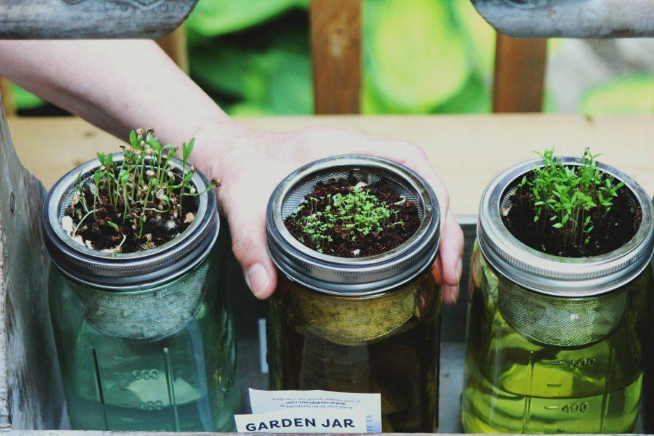 Growing Asian Vegetables in Spring