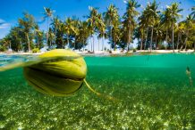 The Mystery of Coconut Migration