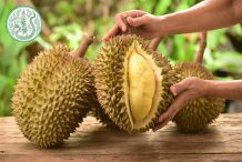 The Exotic Wonder of Thai Durians