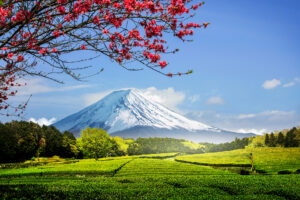 The Invigorating Tastes of Japanese Tea